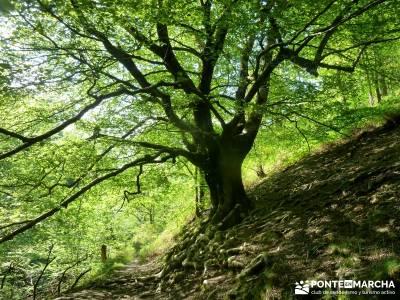 Valle del Baztán - Elizondo - Zugarramurdi; senderismo maravilloso; actividades turismo